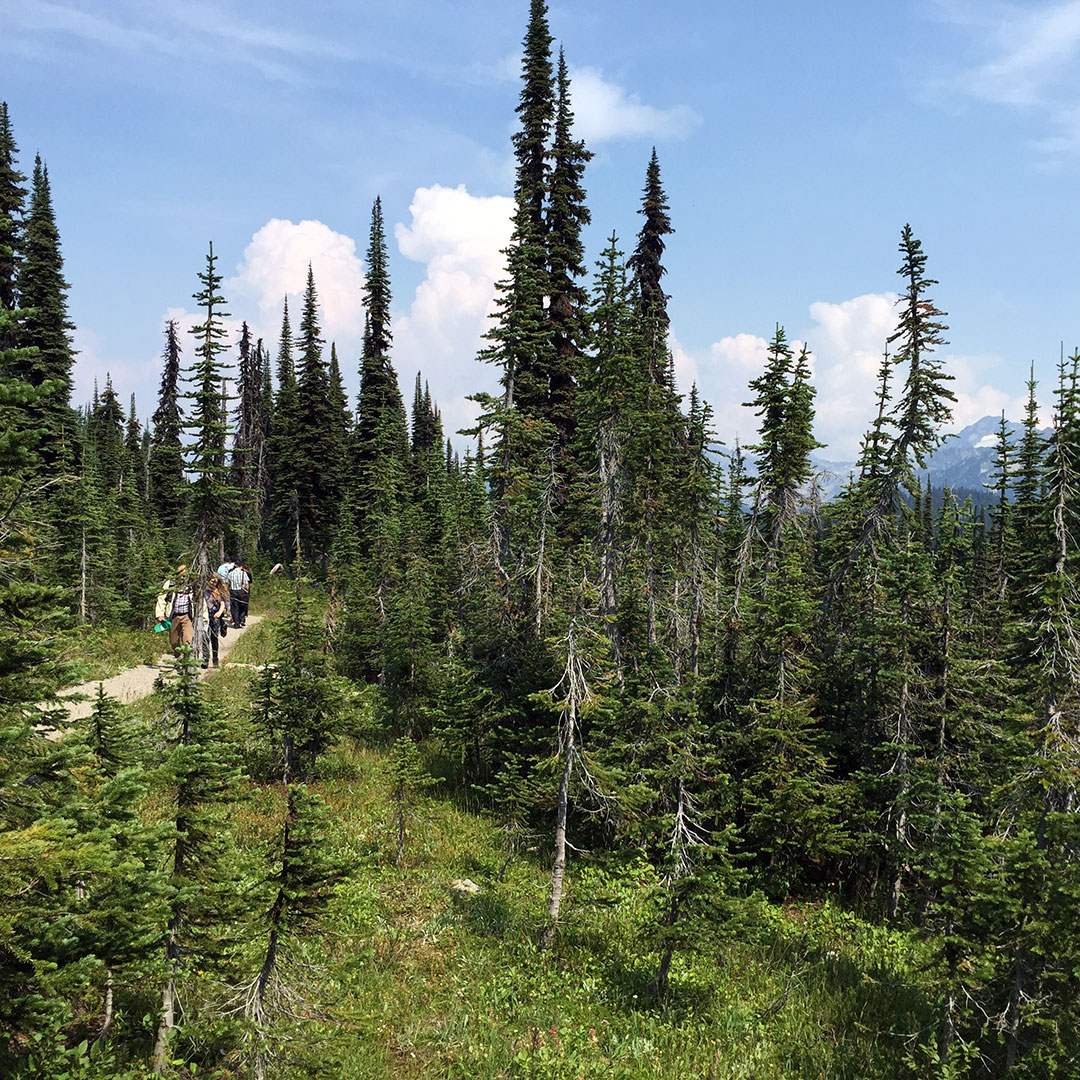 Trails near the Meadows in the Sky Parkway summit in Mount Revelstoke National Park.
